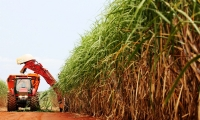 Number of workers in sugarcane mills in Brazil is lower, but quality of jobs grows