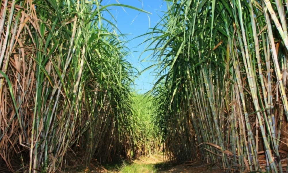Study reveals that Brazilian ethanol can replace 13.7% of the oil consumed in the world and also reduce global CO2 emissions by up to 5.6%