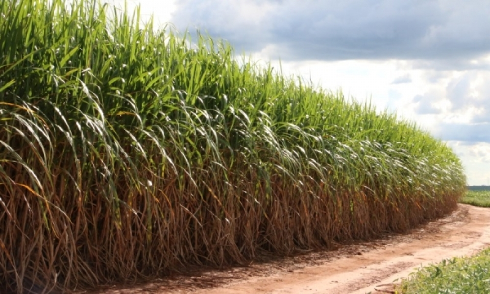 Indian sugar mills win government package of $ 1 billion